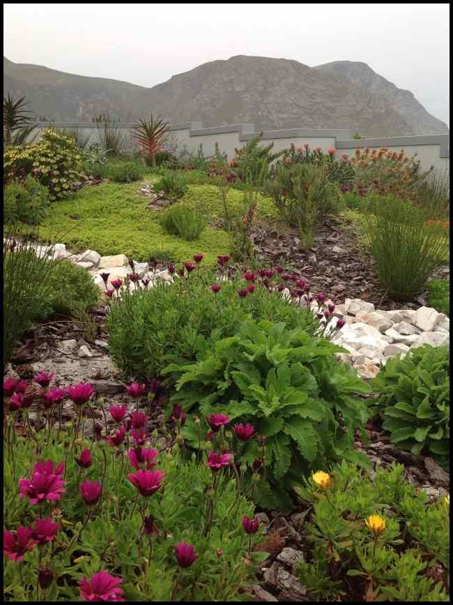 fynbos colour all year