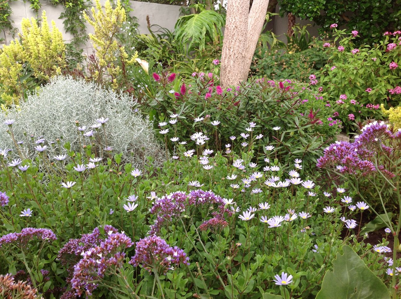 natural fynbos garden